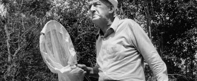 Vladimir Nabokov chasing butterflies